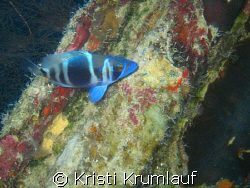 Cool blue fish (dont know) against a rainbow of colors i ... by Kristi Krumlauf 
